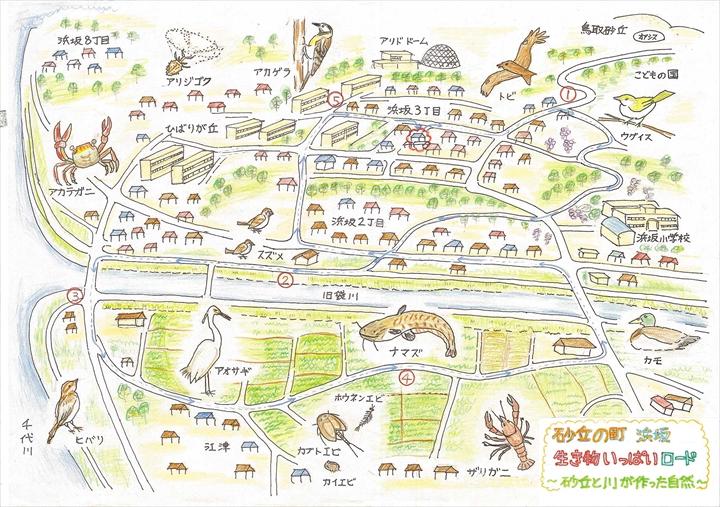 砂丘の町 浜坂 生き物いっぱい ... : 小学校自由研究 : 小学校